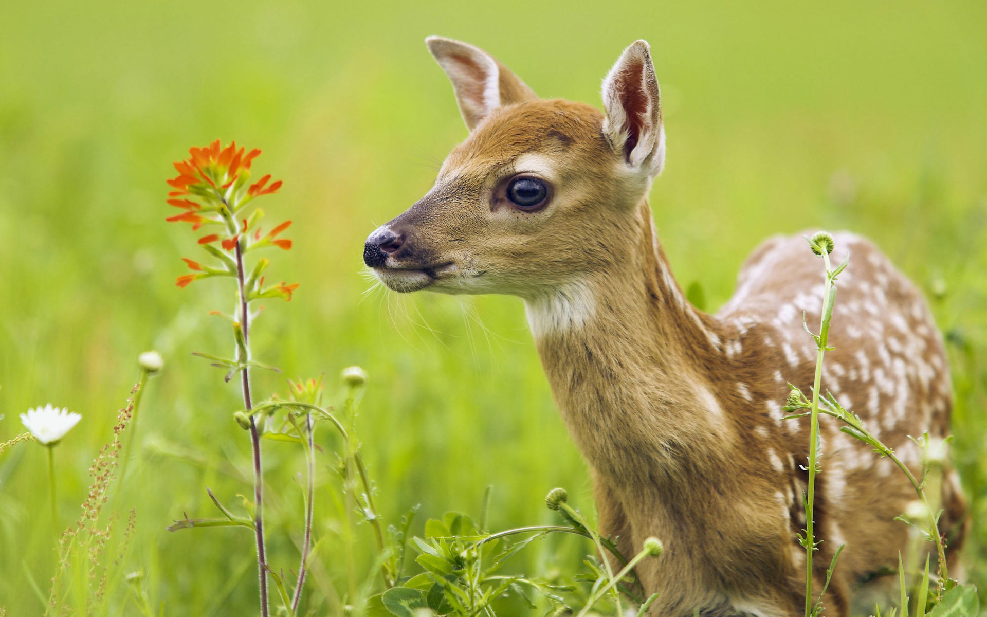 Free Deer high quality background ID:238611 for hd 1920x1200 PC