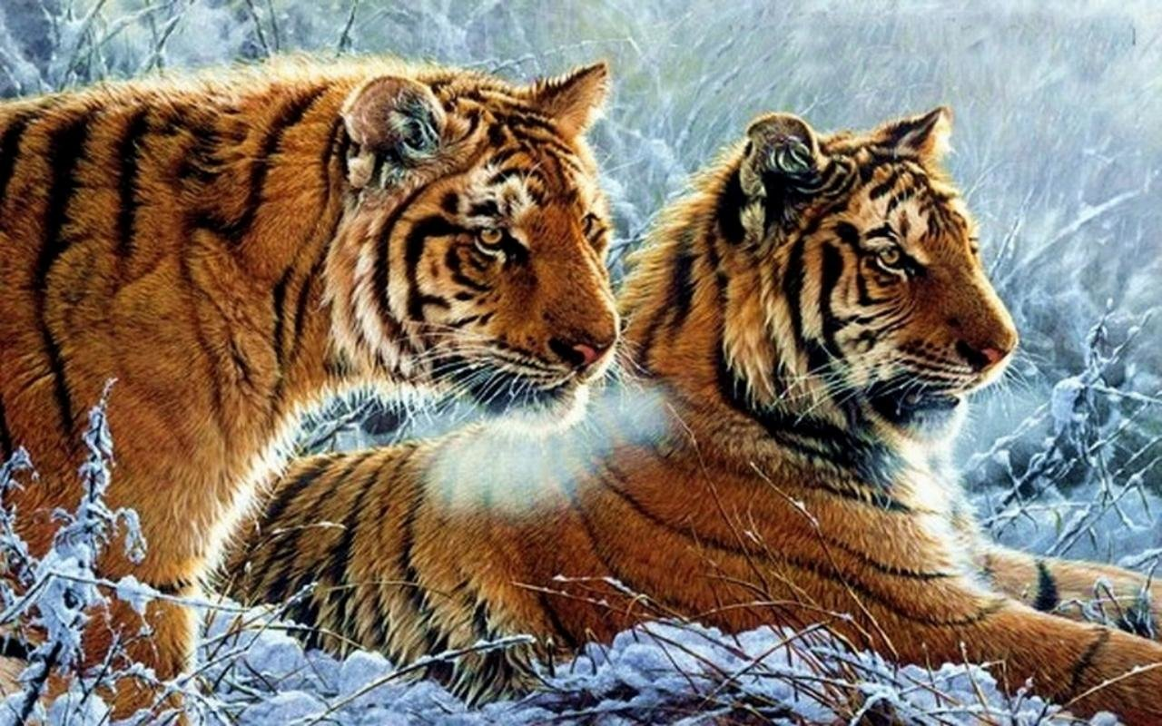 High resolution Tiger hd 1280x800 wallpaper ID:116173 for PC