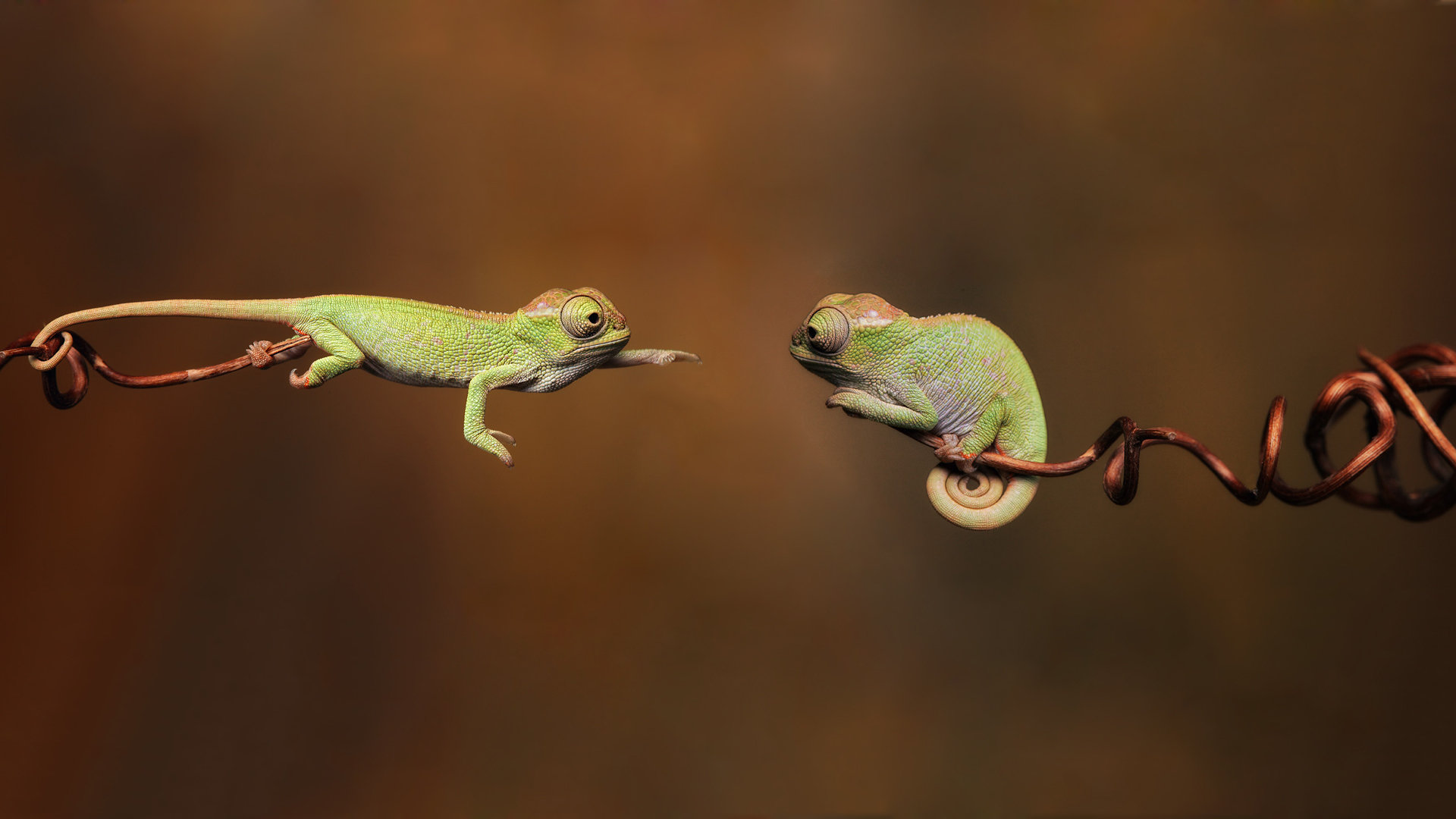 Awesome Chameleon free background ID:462547 for full hd 1080p PC