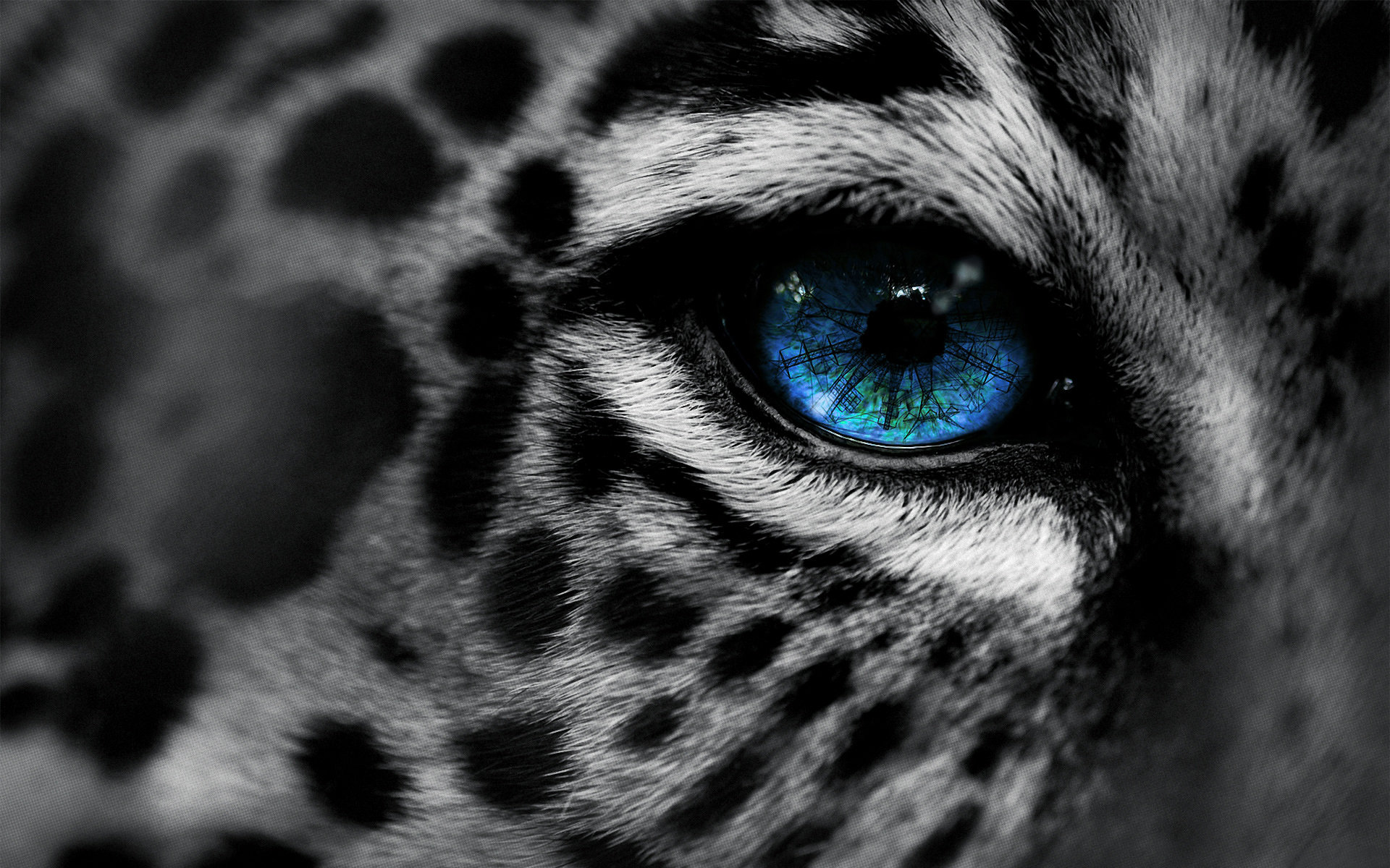 High resolution Leopard hd 1920x1200 background ID:448448 for PC