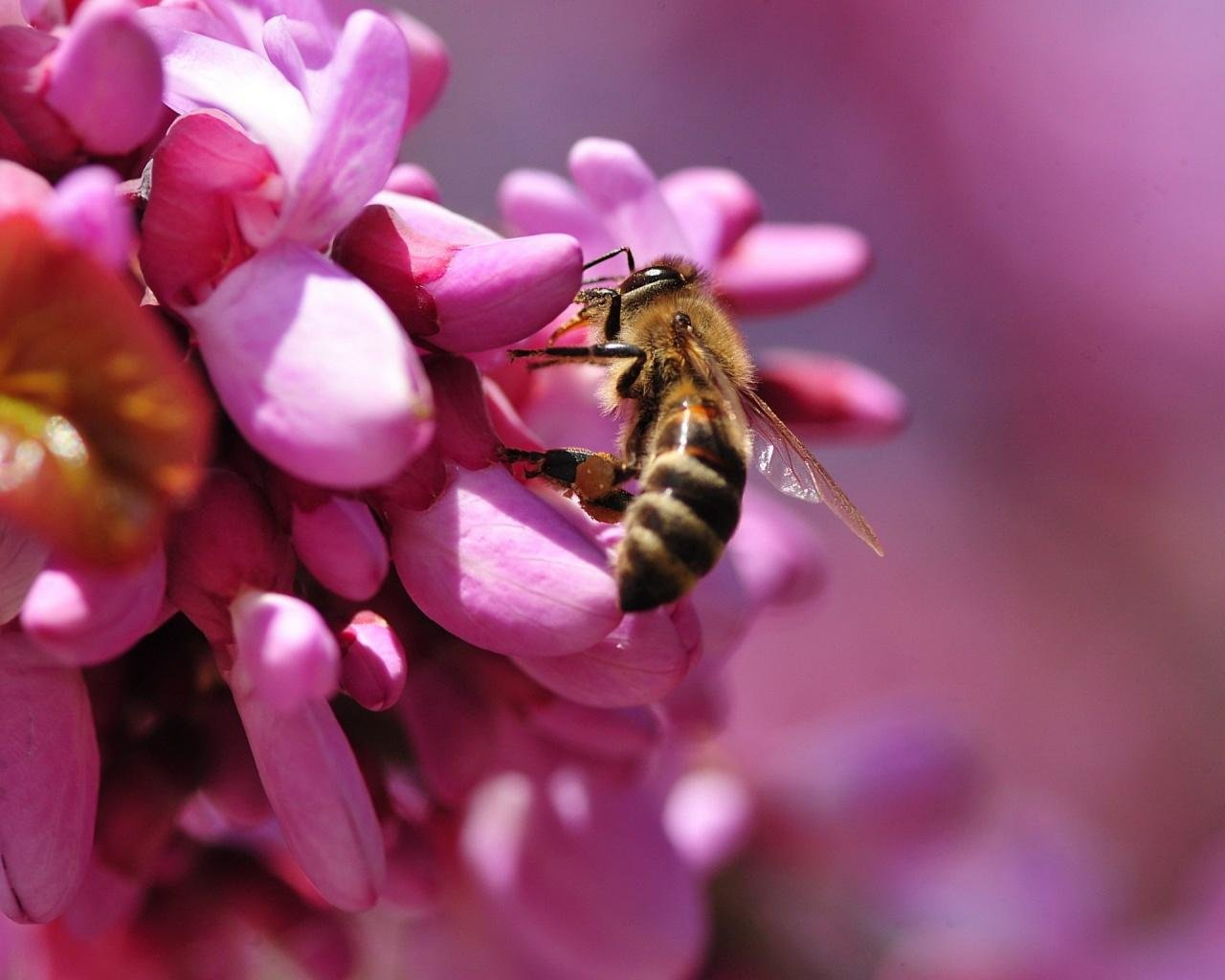 Free Bee high quality background ID:460728 for hd 1280x1024 desktop
