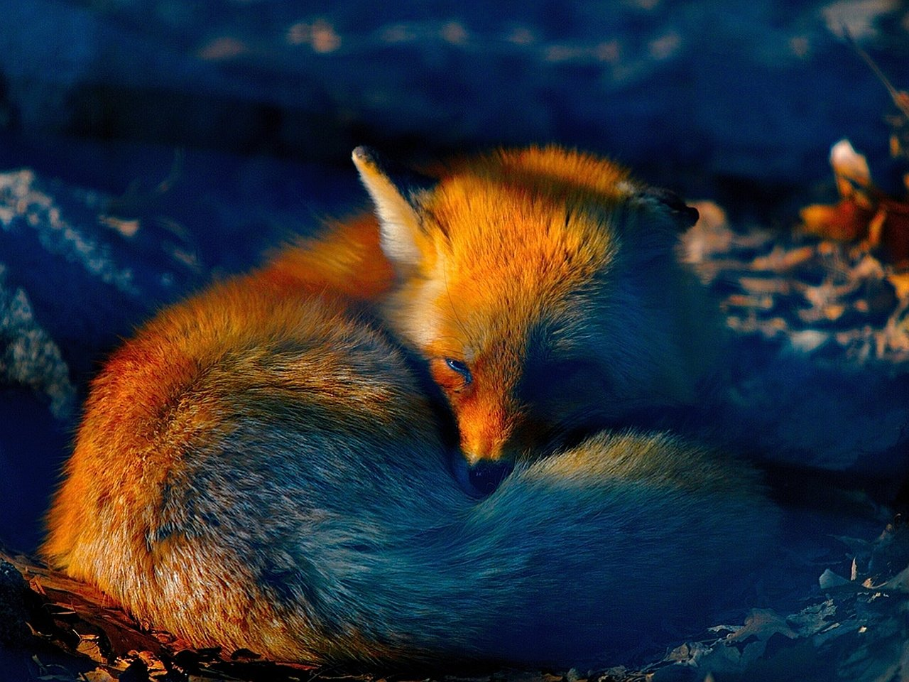 Awesome Fox free background ID:58713 for hd 1280x960 PC