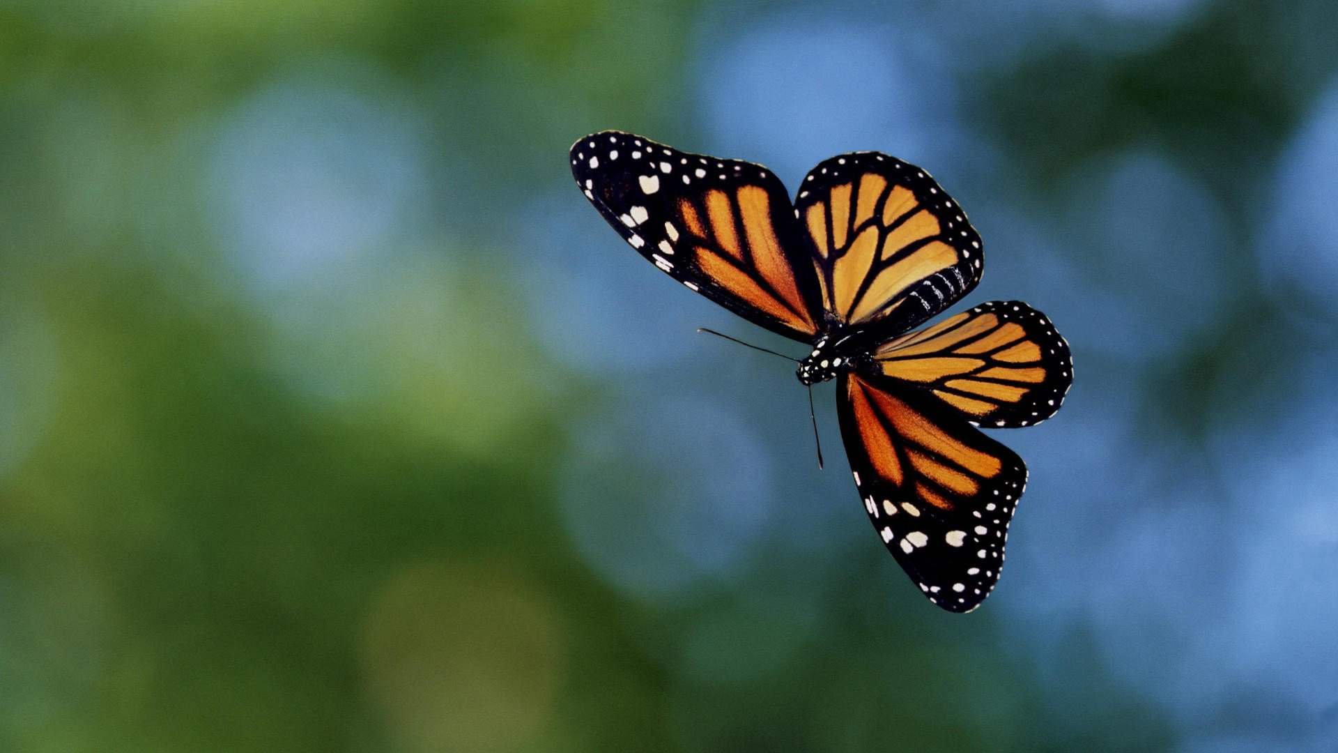 Awesome Butterfly free wallpaper ID:168100 for full hd desktop