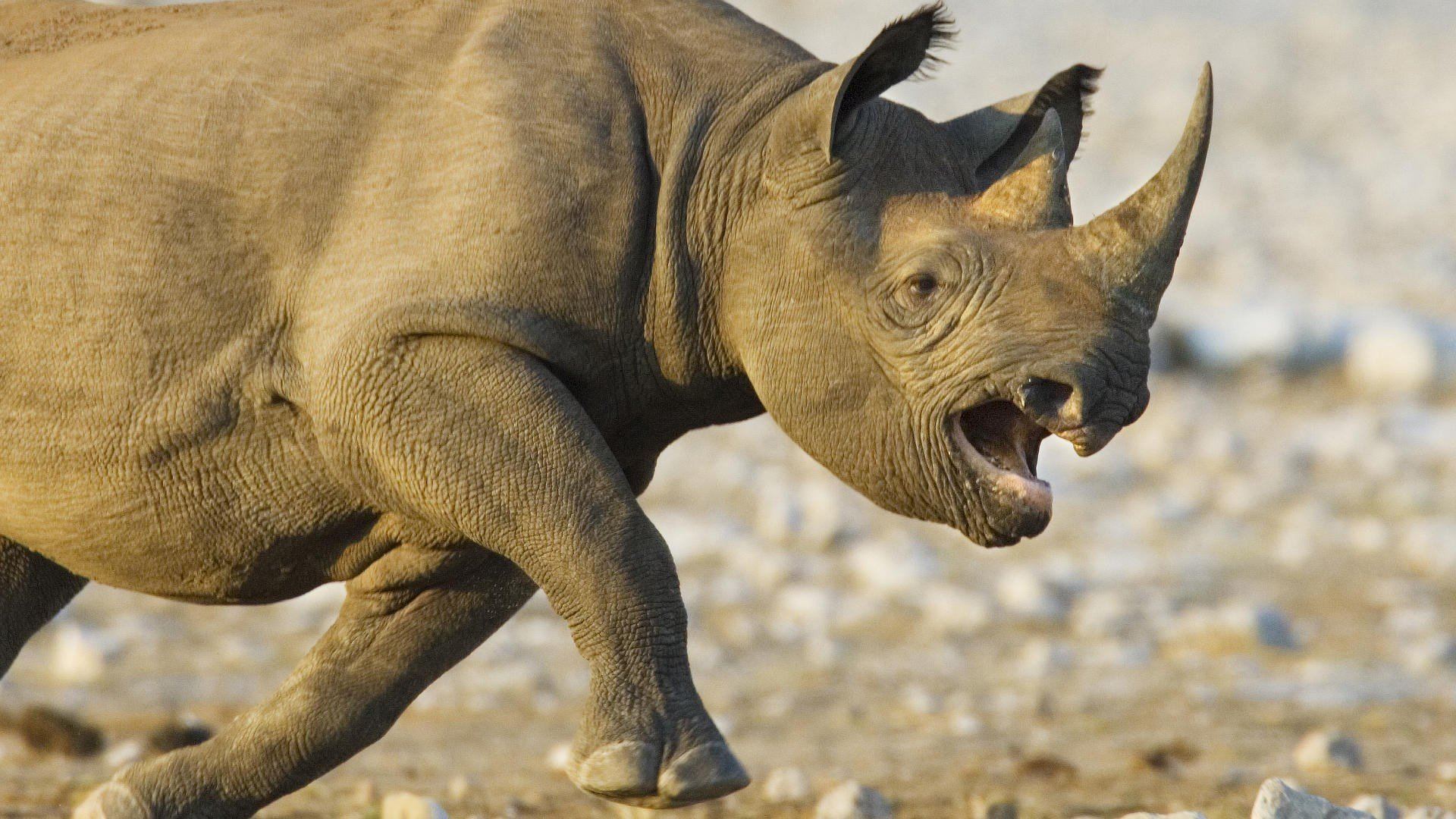 Best Rhino background ID:20159 for High Resolution full hd 1080p desktop