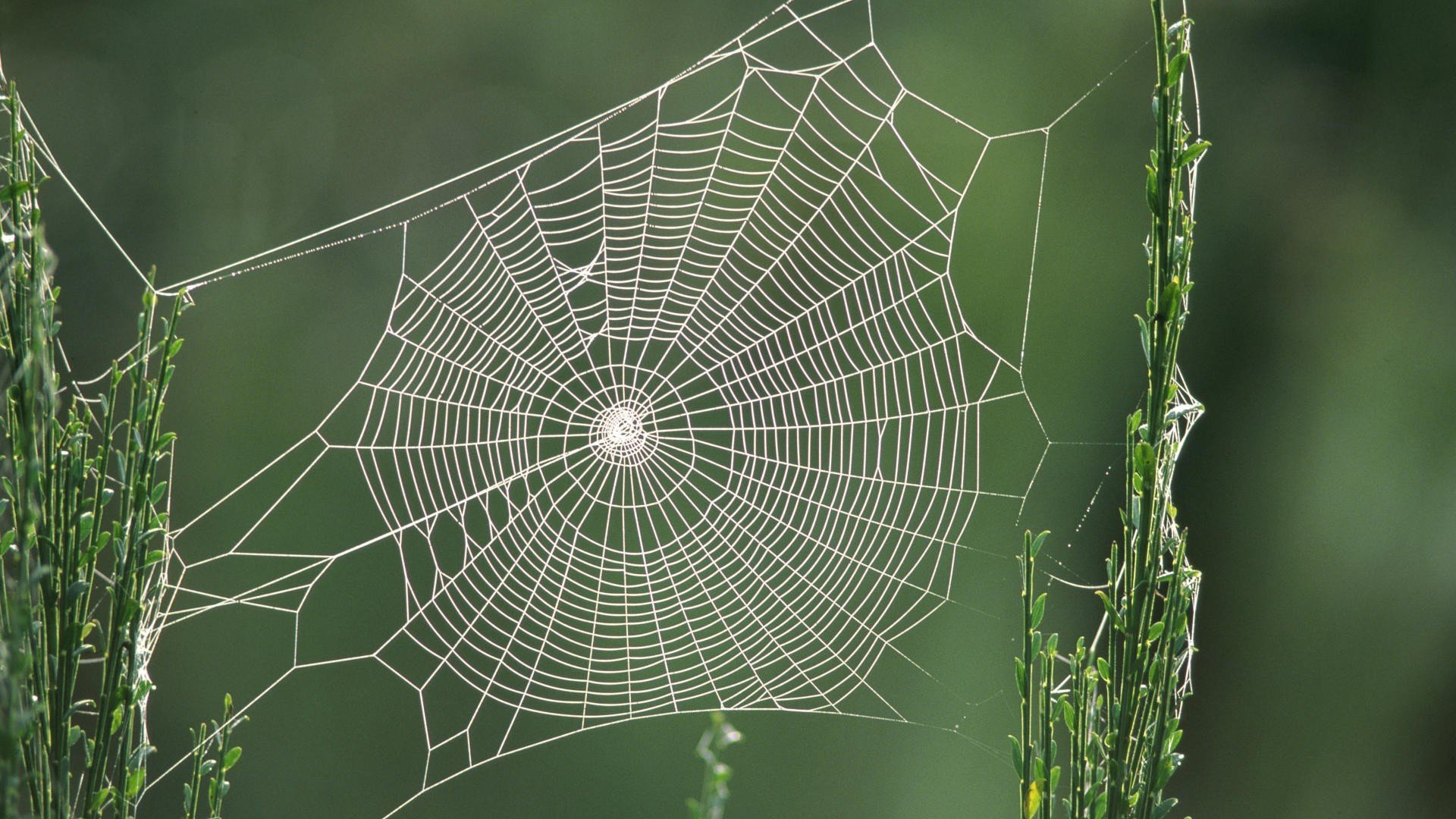 Download full hd Spider Web computer wallpaper ID:184772 for free