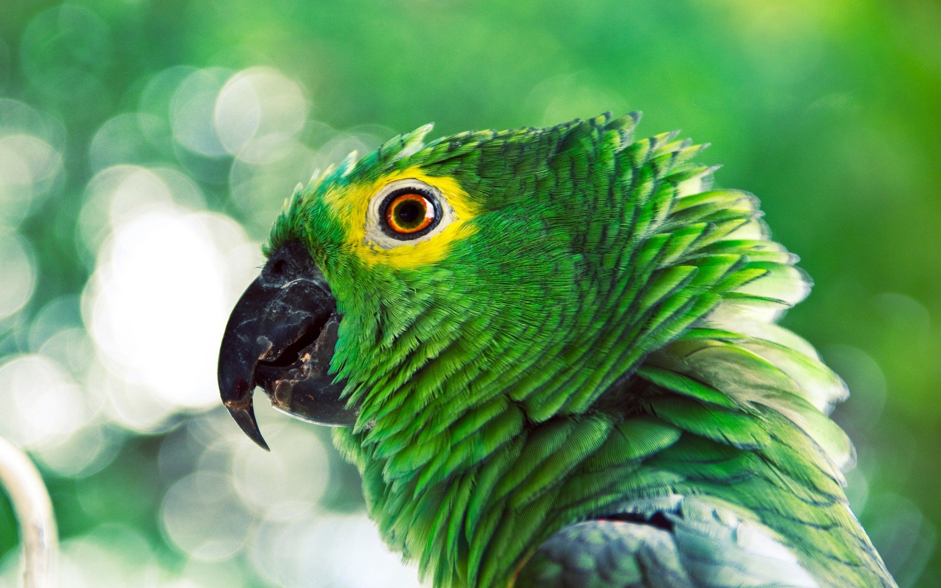Best Parrot background ID:25804 for High Resolution hd 1920x1200 computer