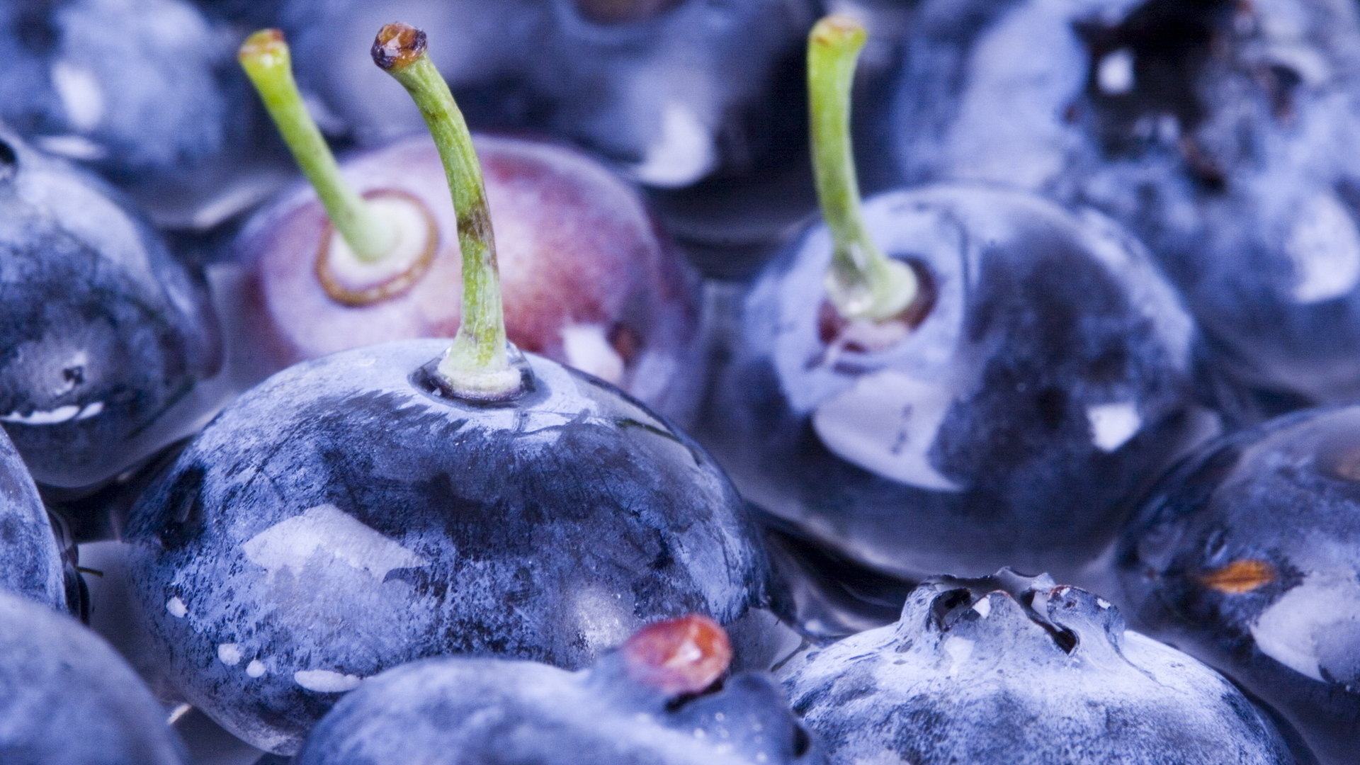 Download full hd 1080p Blueberry computer wallpaper ID:69057 for free