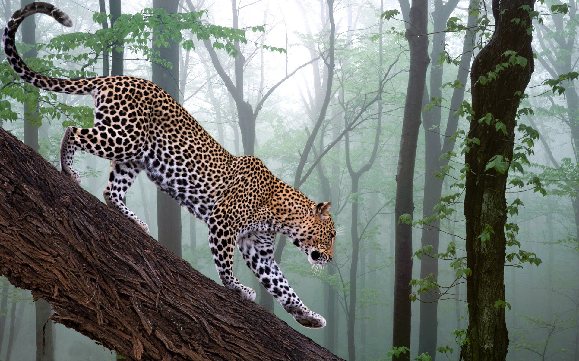 Free Jaguar high quality wallpaper ID:30242 for hd 1920x1200 desktop