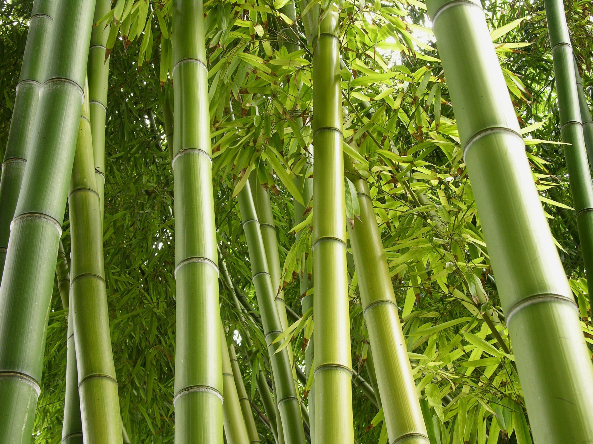 download hd 1920x1440 bamboo desktop wallpaper id:246795 for free