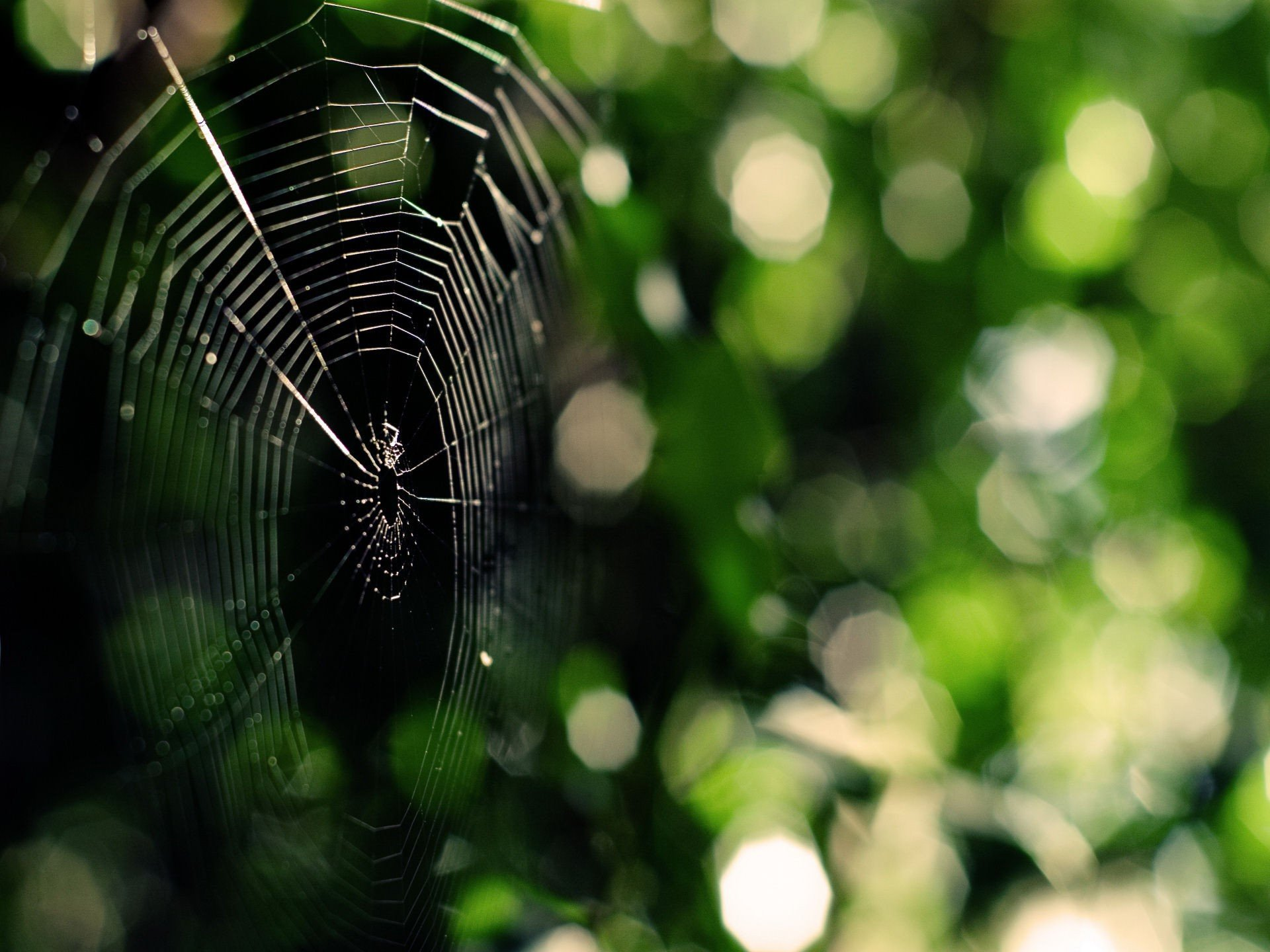 Awesome Spider Web free wallpaper ID:184771 for hd 1920x1440 desktop