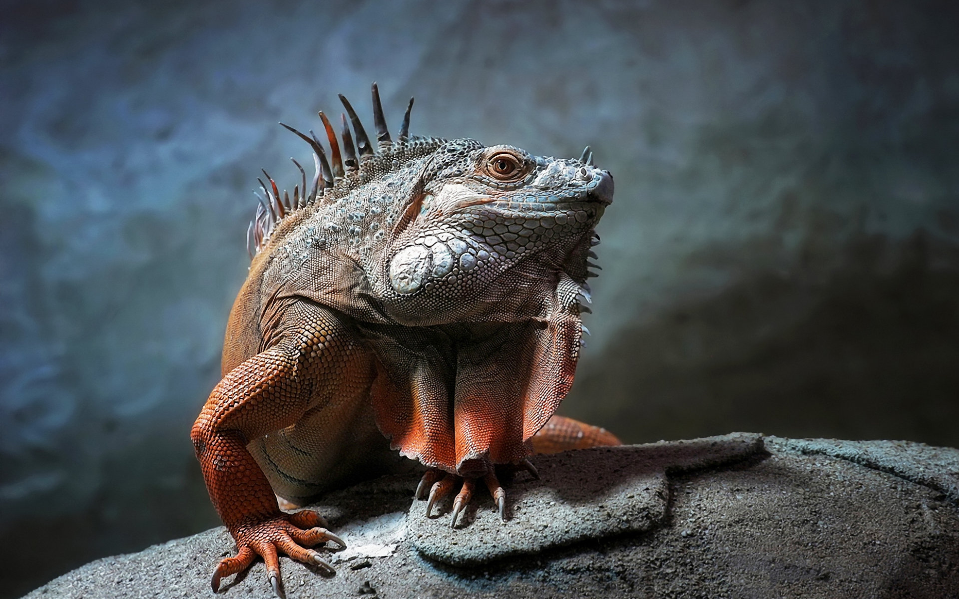 Free Iguana high quality background ID:380948 for hd 1920x1200 desktop