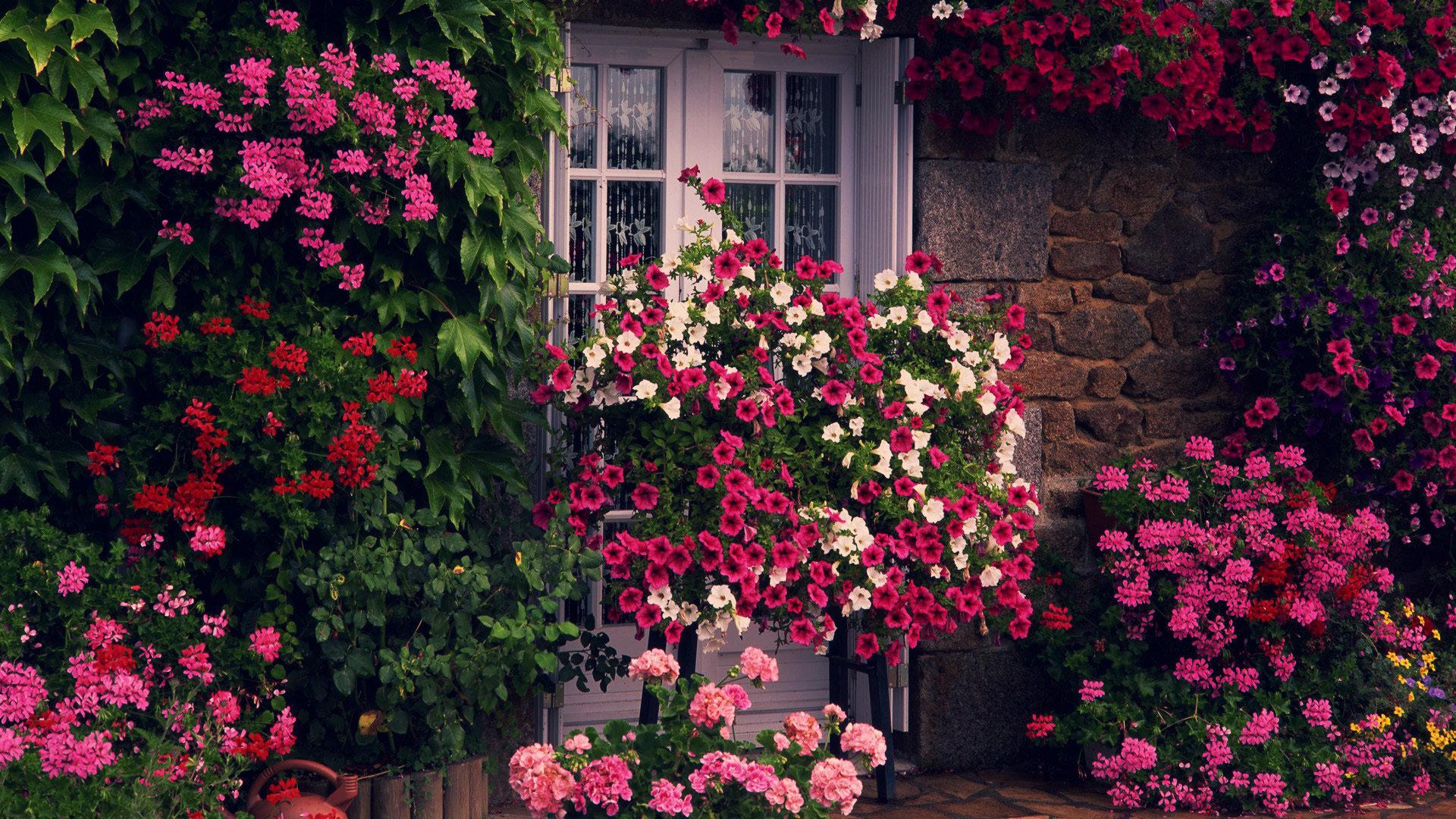 Garden Wallpapers 1920x1080 Full HD (1080p) Desktop