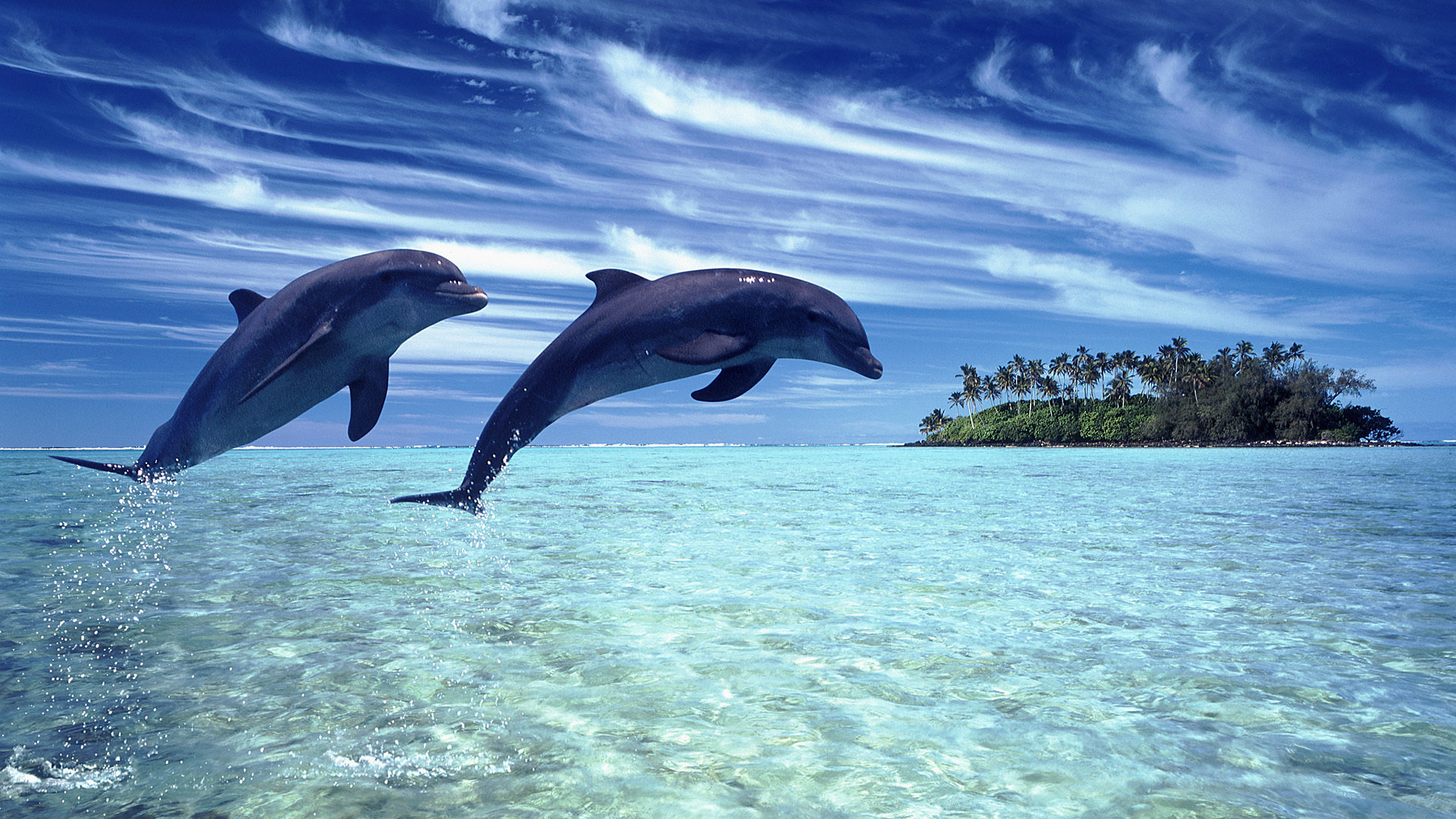 Free download Dolphin wallpaper ID:248403 hd 1920x1080 for desktop