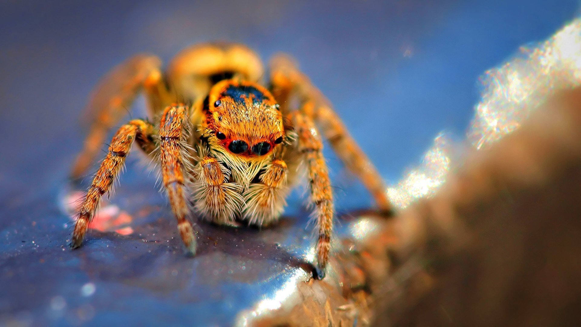 Awesome Spider free wallpaper ID:22290 for full hd 1080p PC