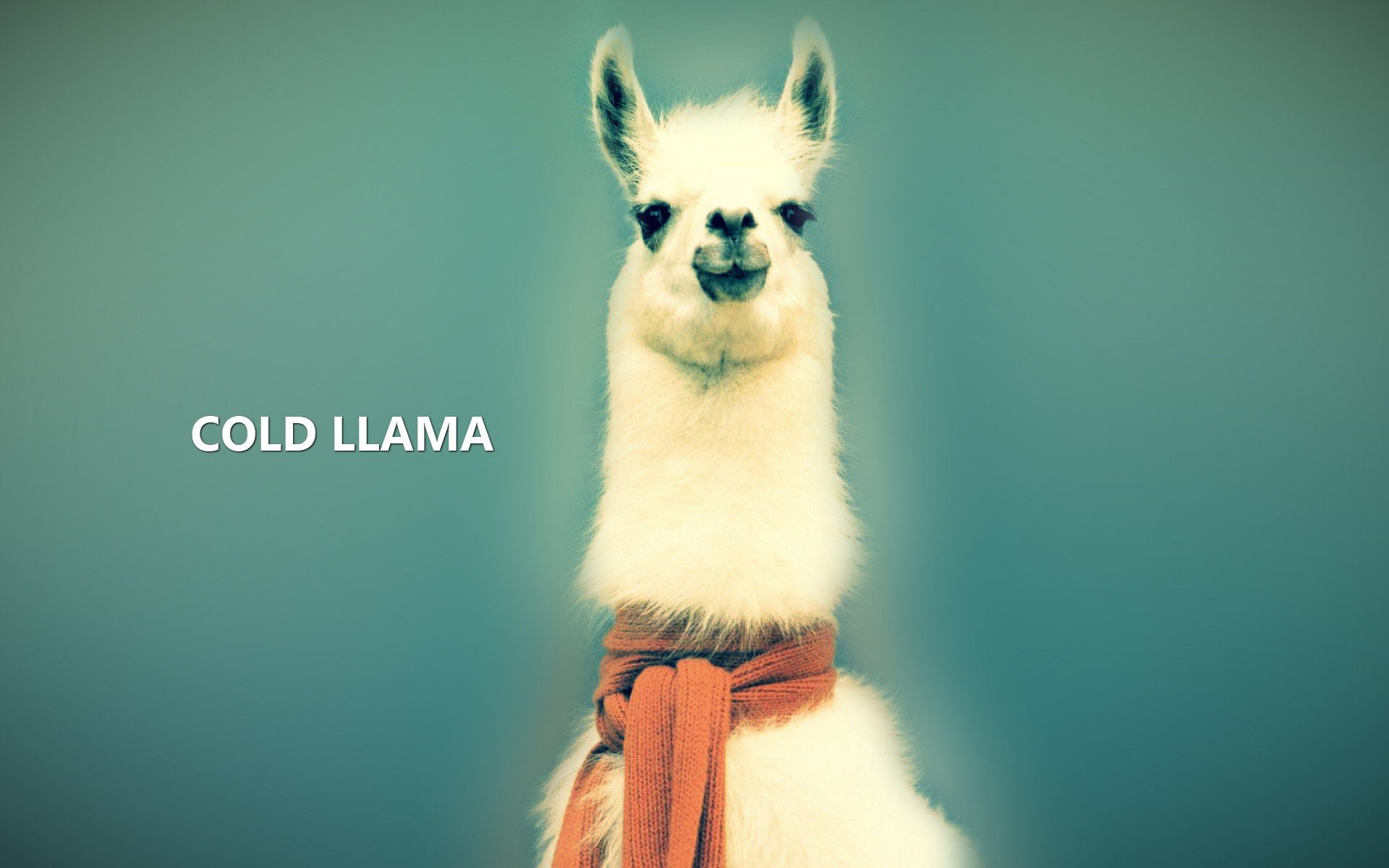 Download hd 1920x1200 Llama desktop wallpaper ID:165673 for free