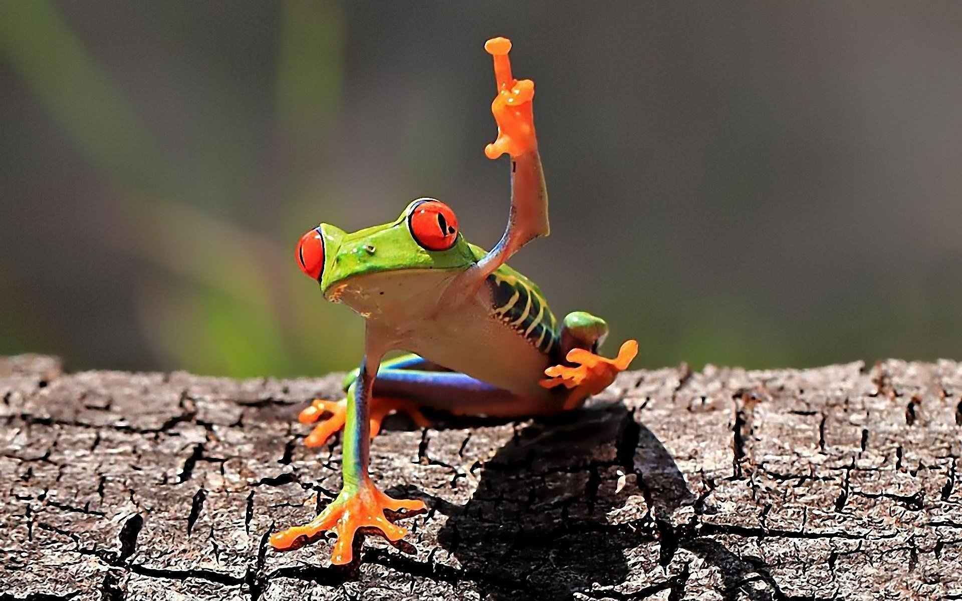 Free Frog high quality background ID:328701 for hd 1920x1200 PC