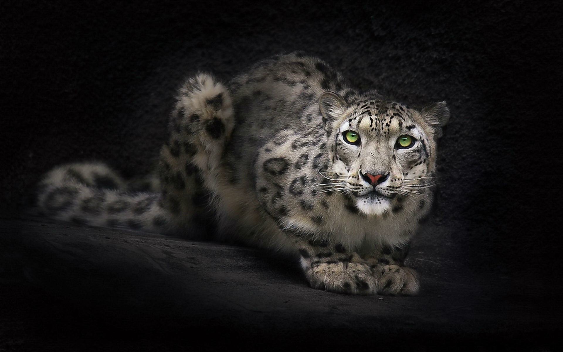 Download hd 1920x1200 Snow Leopard PC background ID:34381 for free