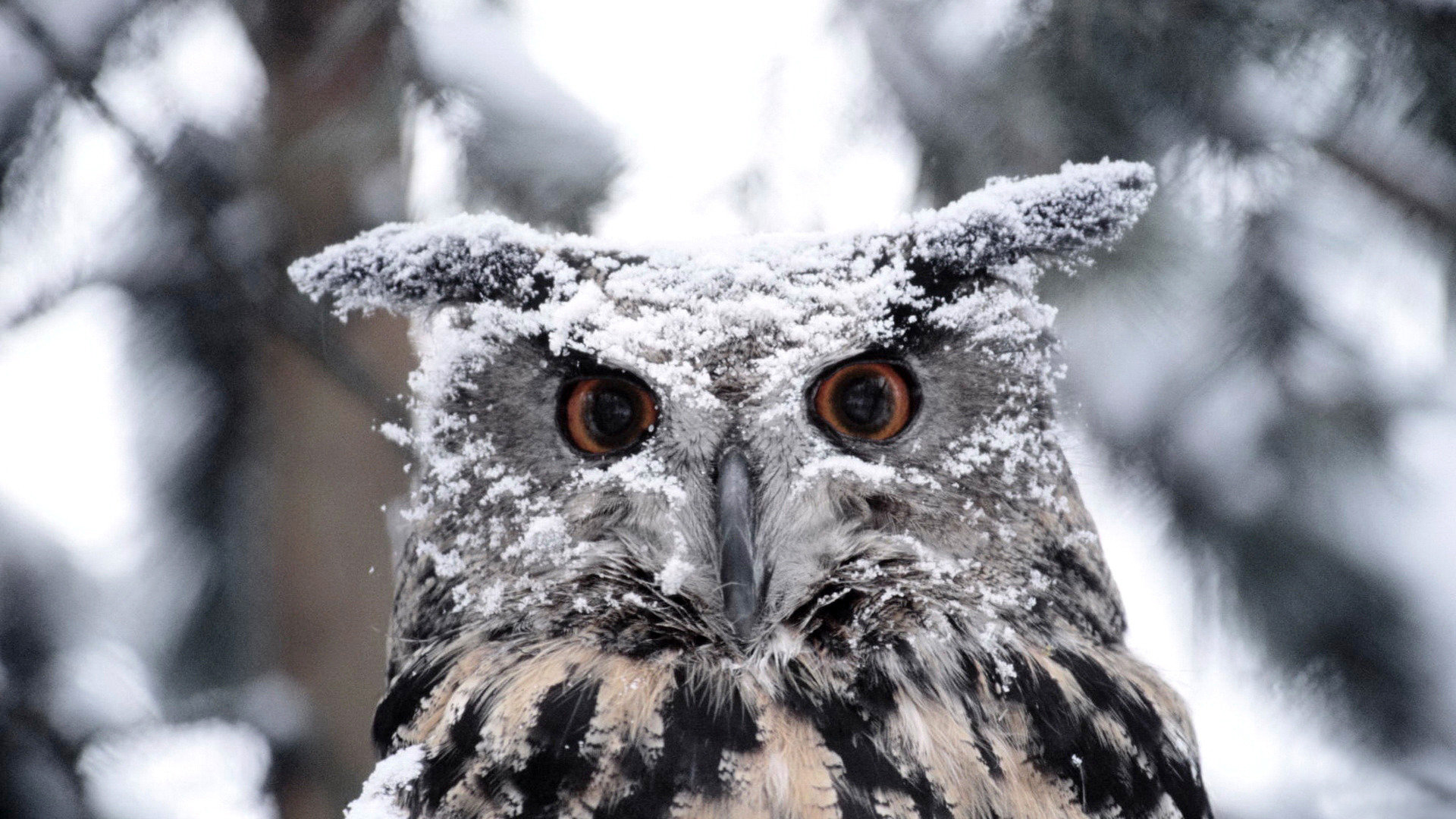 High resolution Great Horned Owl full hd 1920x1080 wallpaper ID:297787 for computer