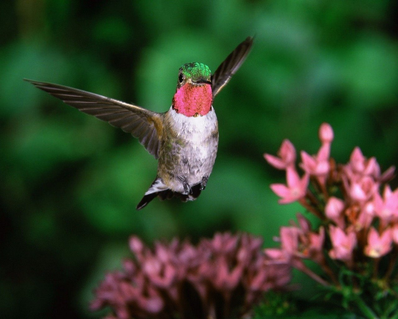 Awesome Hummingbird free background ID:215847 for hd 1280x1024 computer