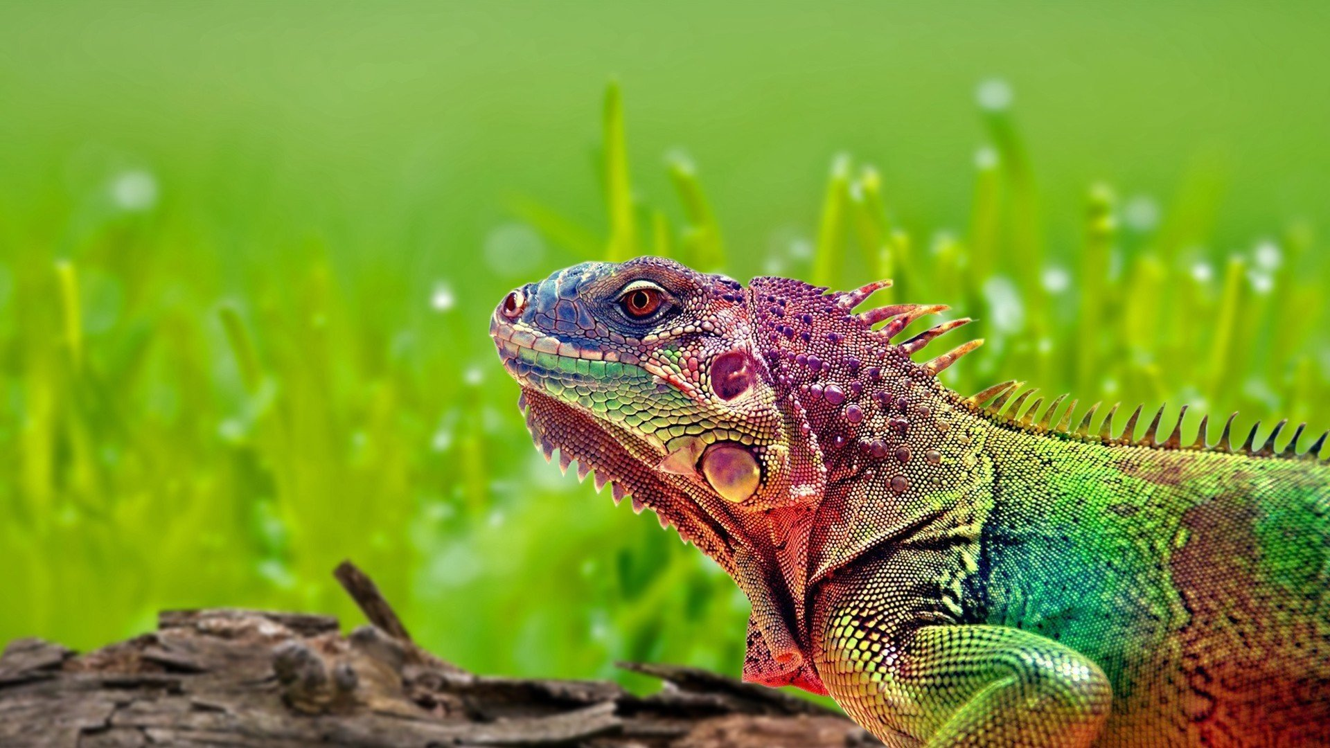 Awesome Iguana free background ID:380895 for full hd 1920x1080 PC