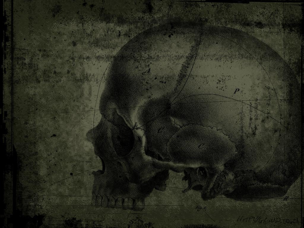 Free download Skull background ID:320428 hd 1024x768 for desktop
