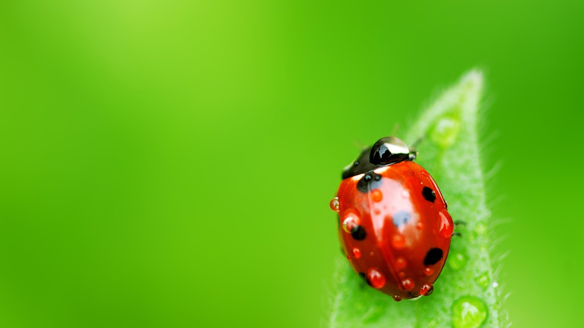 Free Ladybug high quality wallpaper ID:270401 for full hd 1920x1080 computer