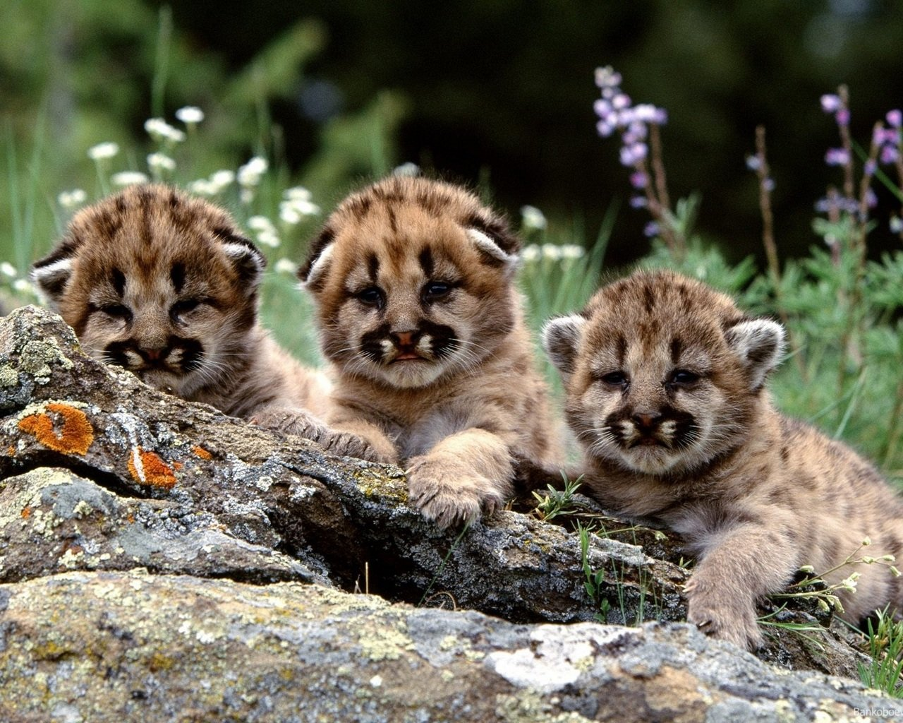 Awesome Baby Animal (cub) free background ID:422655 for hd 1280x1024 computer