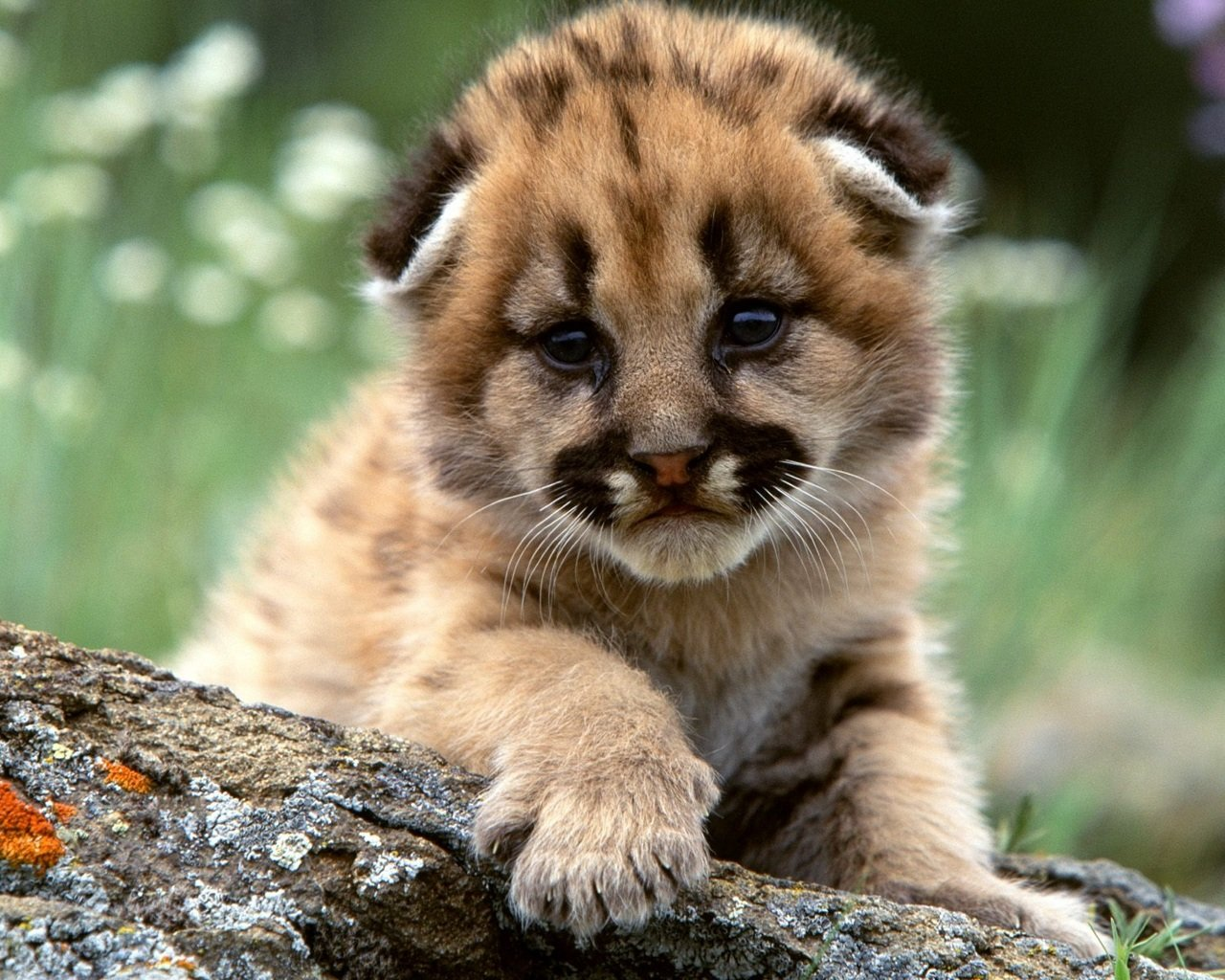 Best Baby Animal (cub) wallpaper ID:422657 for High Resolution hd 1280x1024 computer