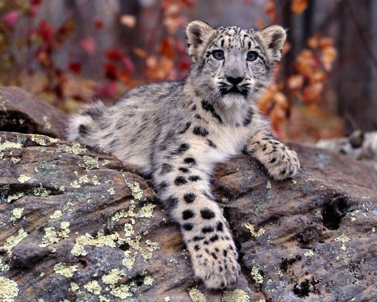 Download hd 1280x1024 Snow Leopard PC wallpaper ID:34380 for free