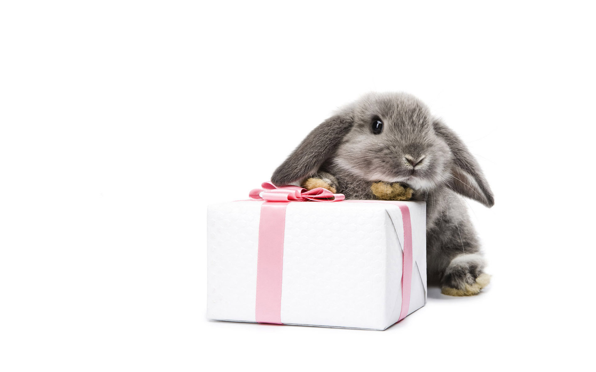 Awesome Rabbit & Bunny free background ID:249163 for hd 1920x1200 desktop
