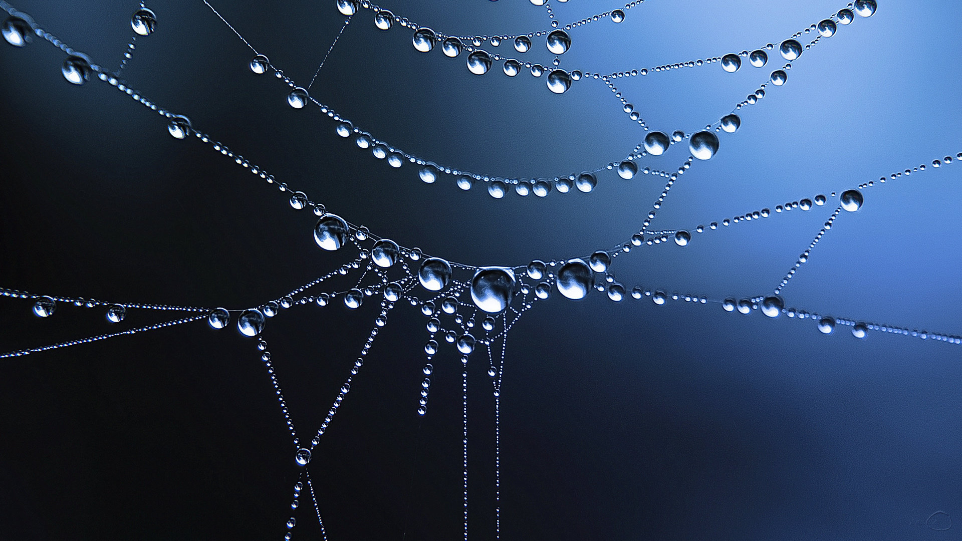 Awesome Spider Web free background ID:184829 for hd 1920x1080 desktop