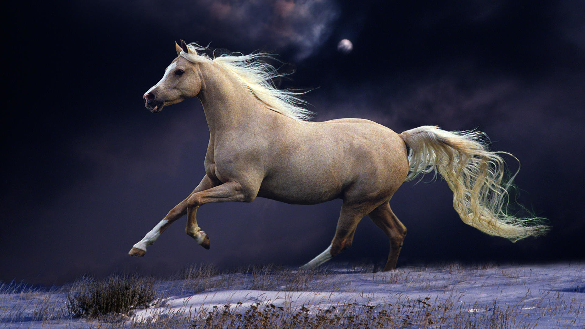 Free Horse high quality background ID:23255 for full hd 1920x1080 desktop