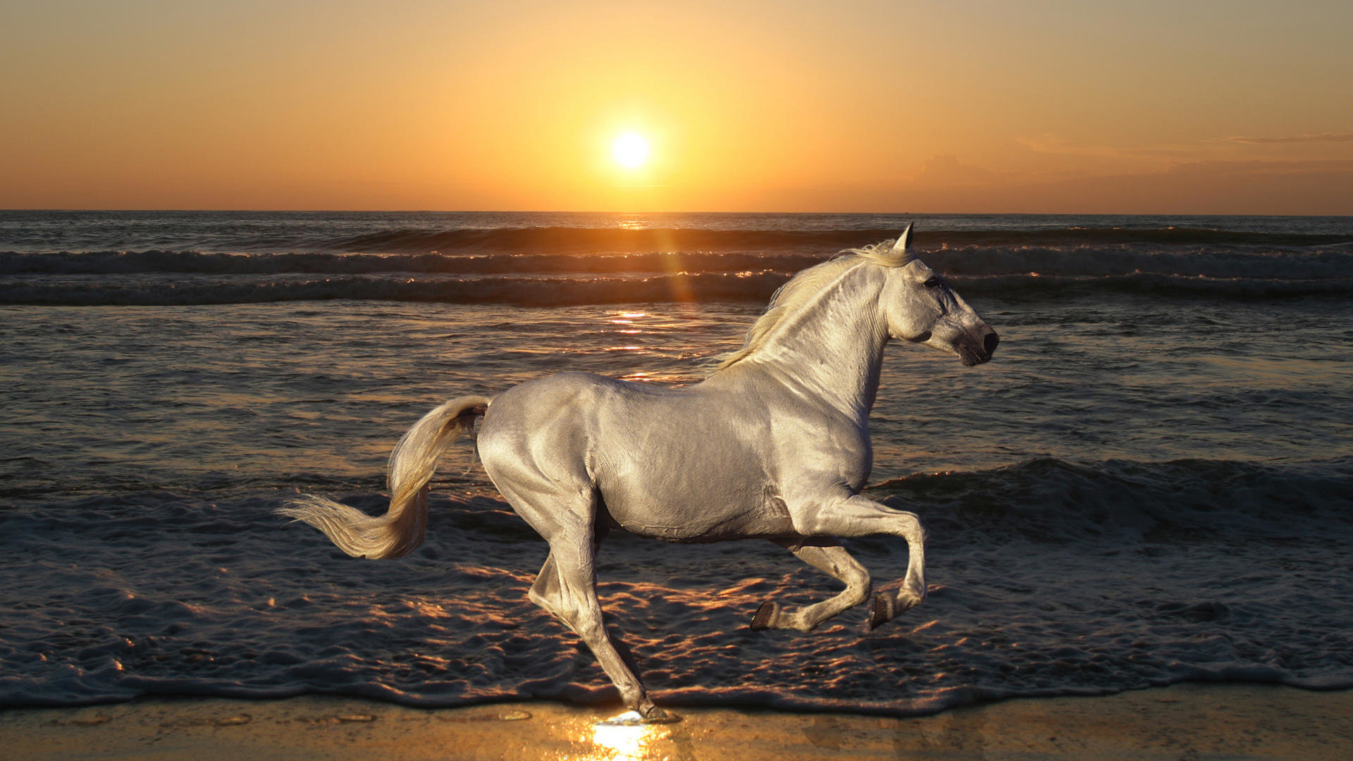 Free download Horse wallpaper ID:23637 full hd for PC