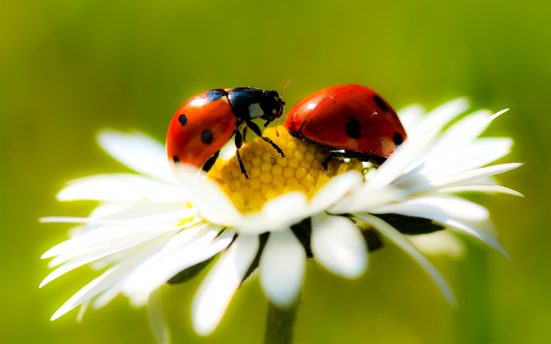 Free download Ladybug background ID:270583 hd 1920x1200 for desktop