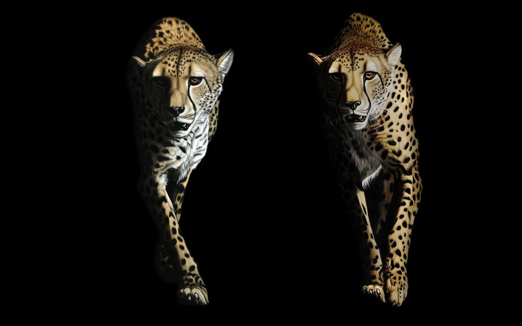 High resolution Cheetah hd 1680x1050 wallpaper ID:161876 for desktop