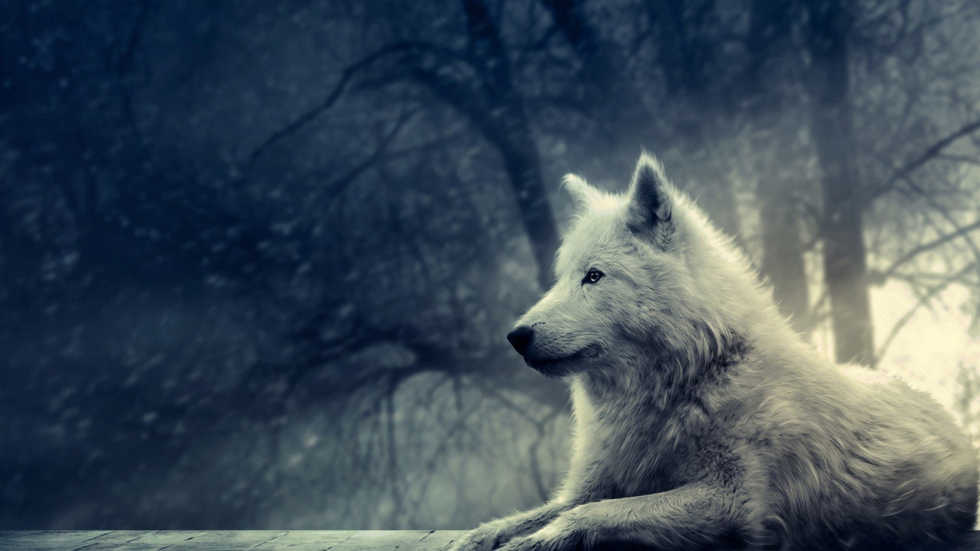 Free download Wolf background ID:117666 hd 1080p for desktop