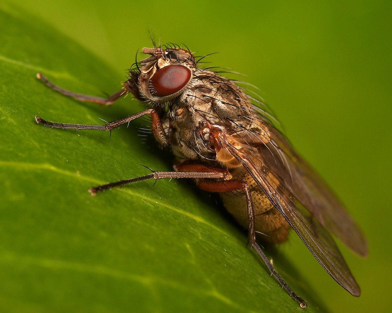 Awesome Fly free wallpaper ID:275241 for hd 1280x1024 computer