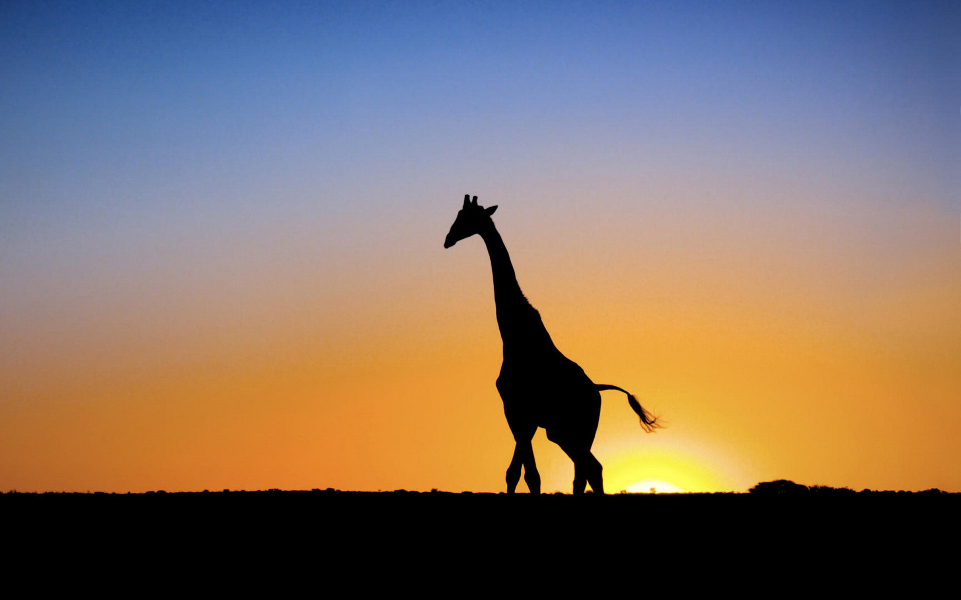 Awesome Giraffe free background ID:332578 for hd 1920x1200 PC