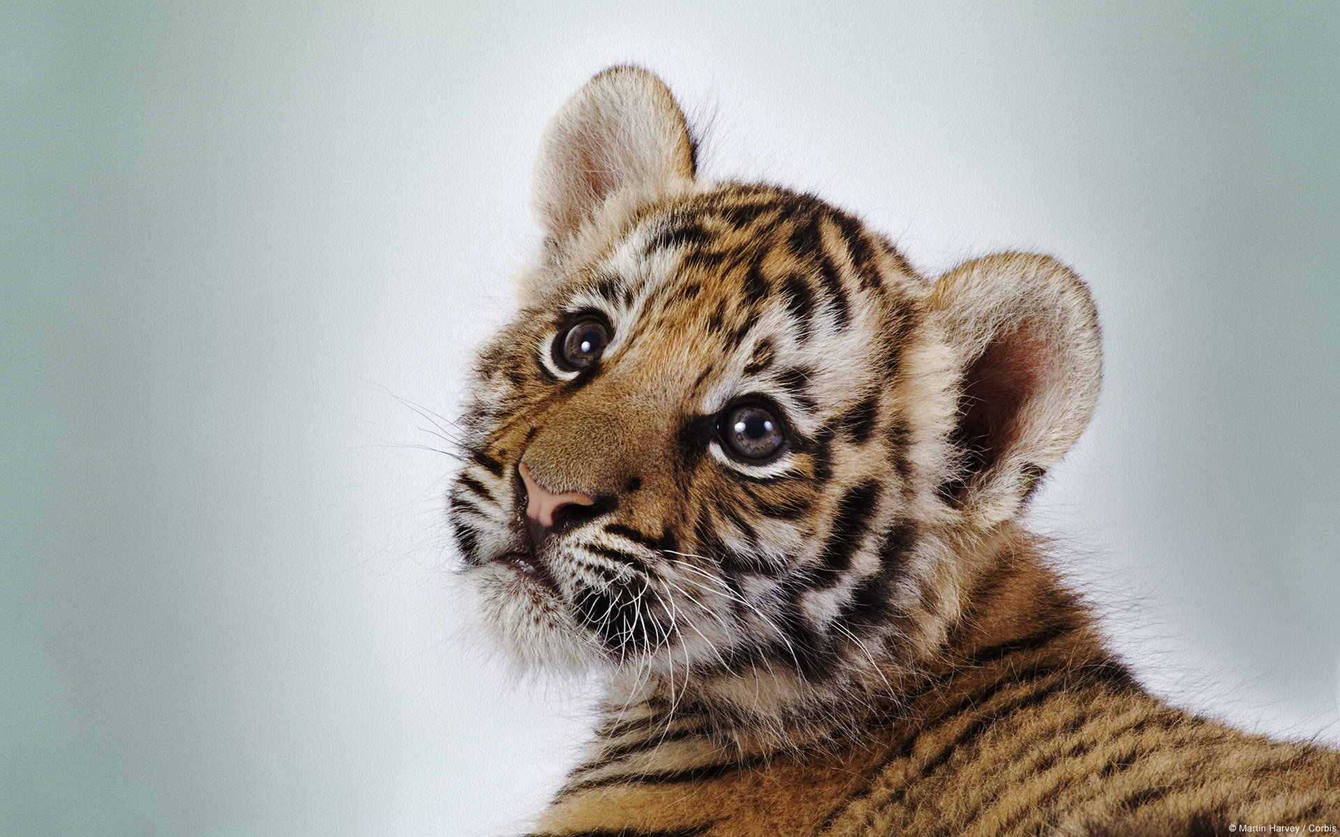 Awesome Baby Animal (cub) free background ID:115637 for hd 1920x1200 computer