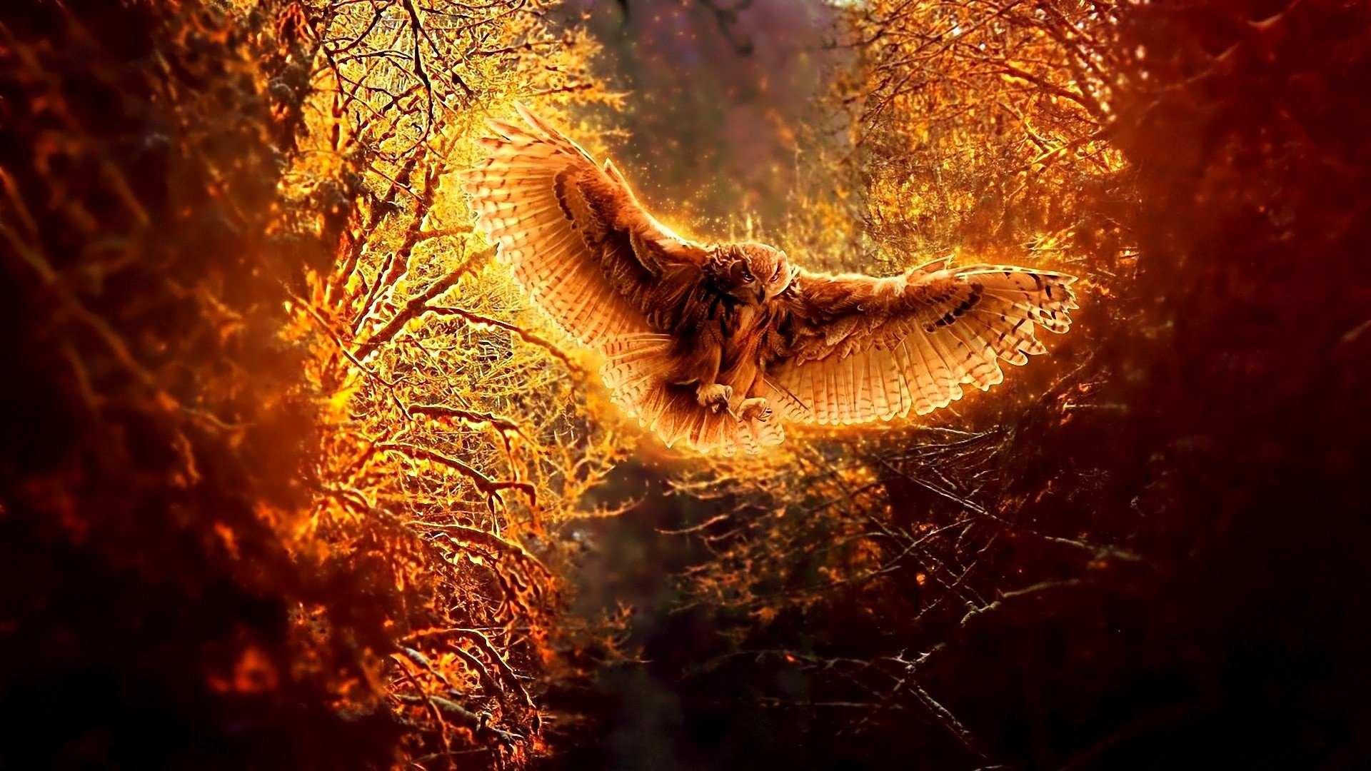 High resolution Owl hd 1080p background ID:236888 for PC