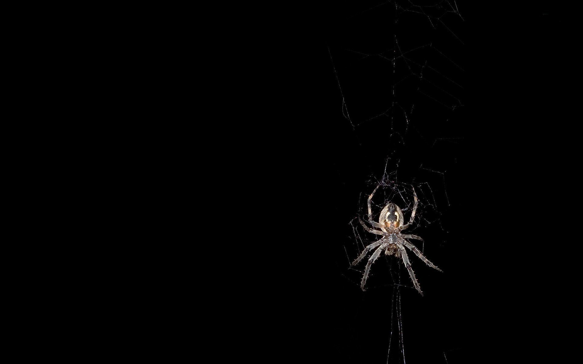 Free Spider high quality wallpaper ID:22110 for hd 1920x1200 desktop