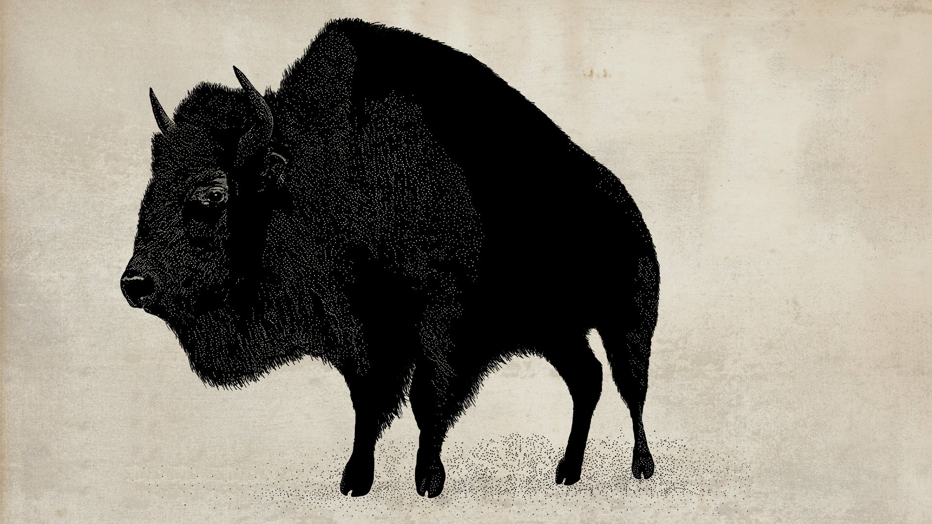 High resolution Bison full hd 1920x1080 background ID:130675 for PC