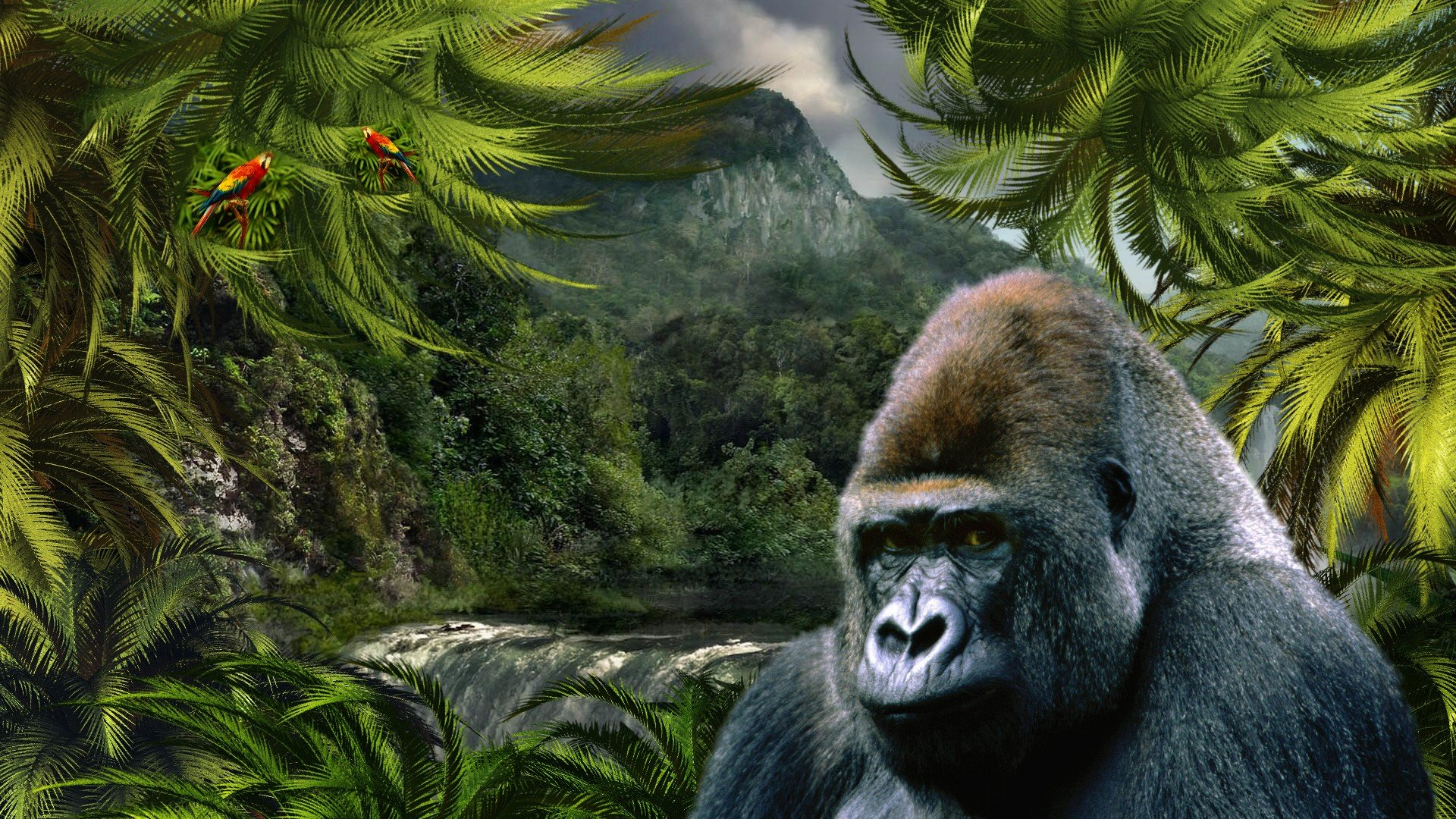 Free Gorilla high quality background ID:145541 for full hd 1080p PC