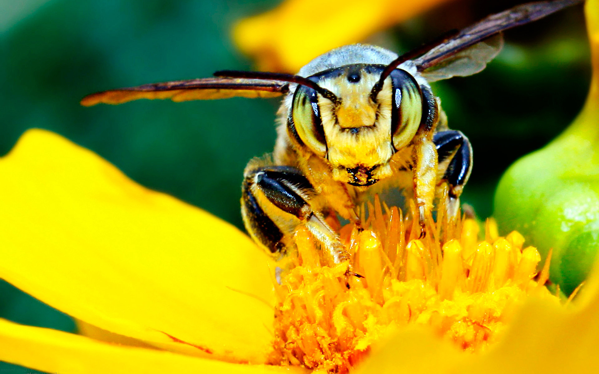 High resolution Bee hd 1920x1200 wallpaper ID:460738 for desktop