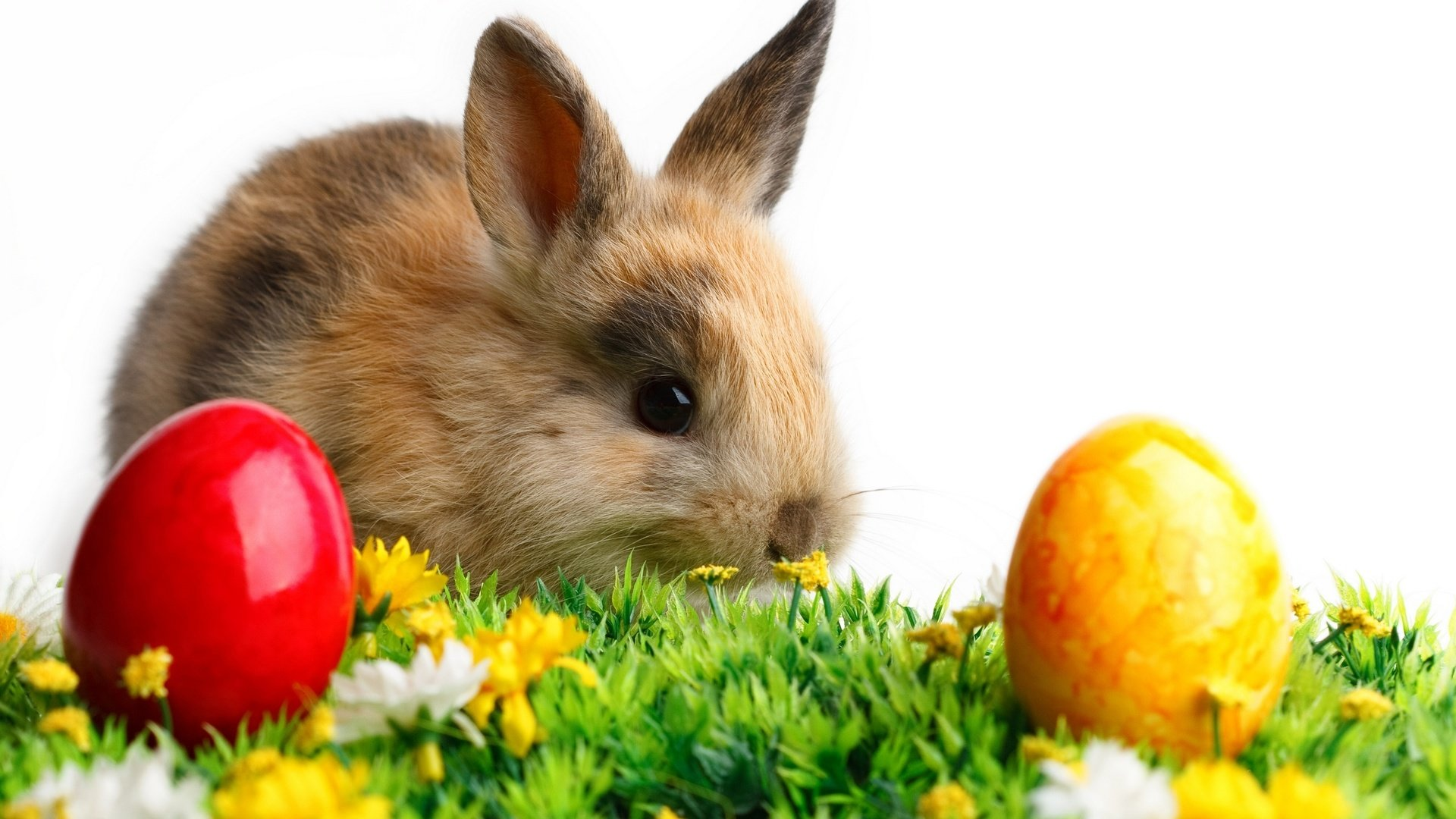 Download hd 1080p Rabbit & Bunny desktop background ID:249110 for free