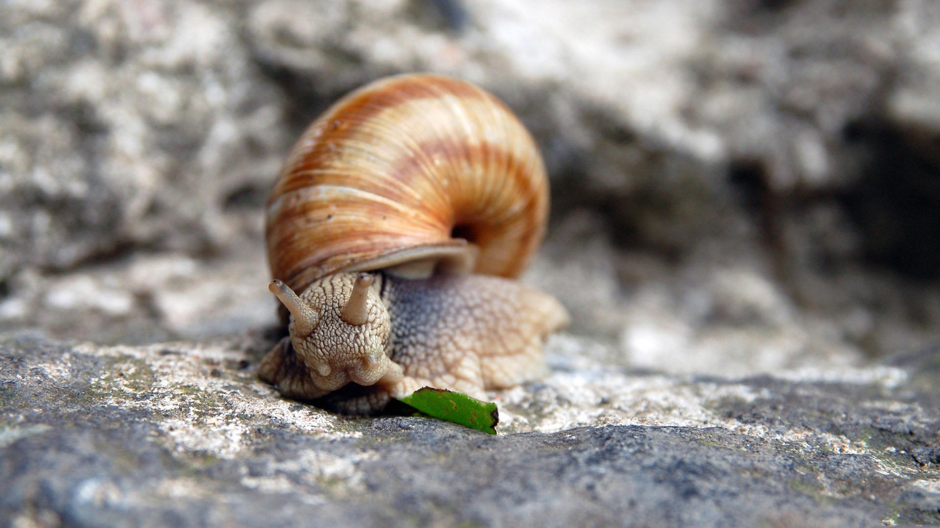 Download full hd Snail computer wallpaper ID:198899 for free
