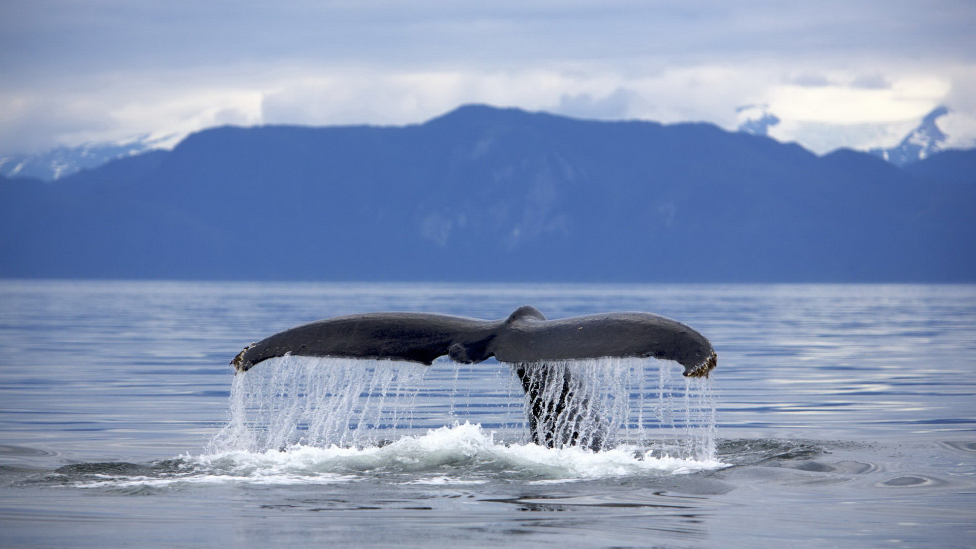 Whale Wallpapers 1920x1080 Full Hd 1080p Desktop Backgrounds