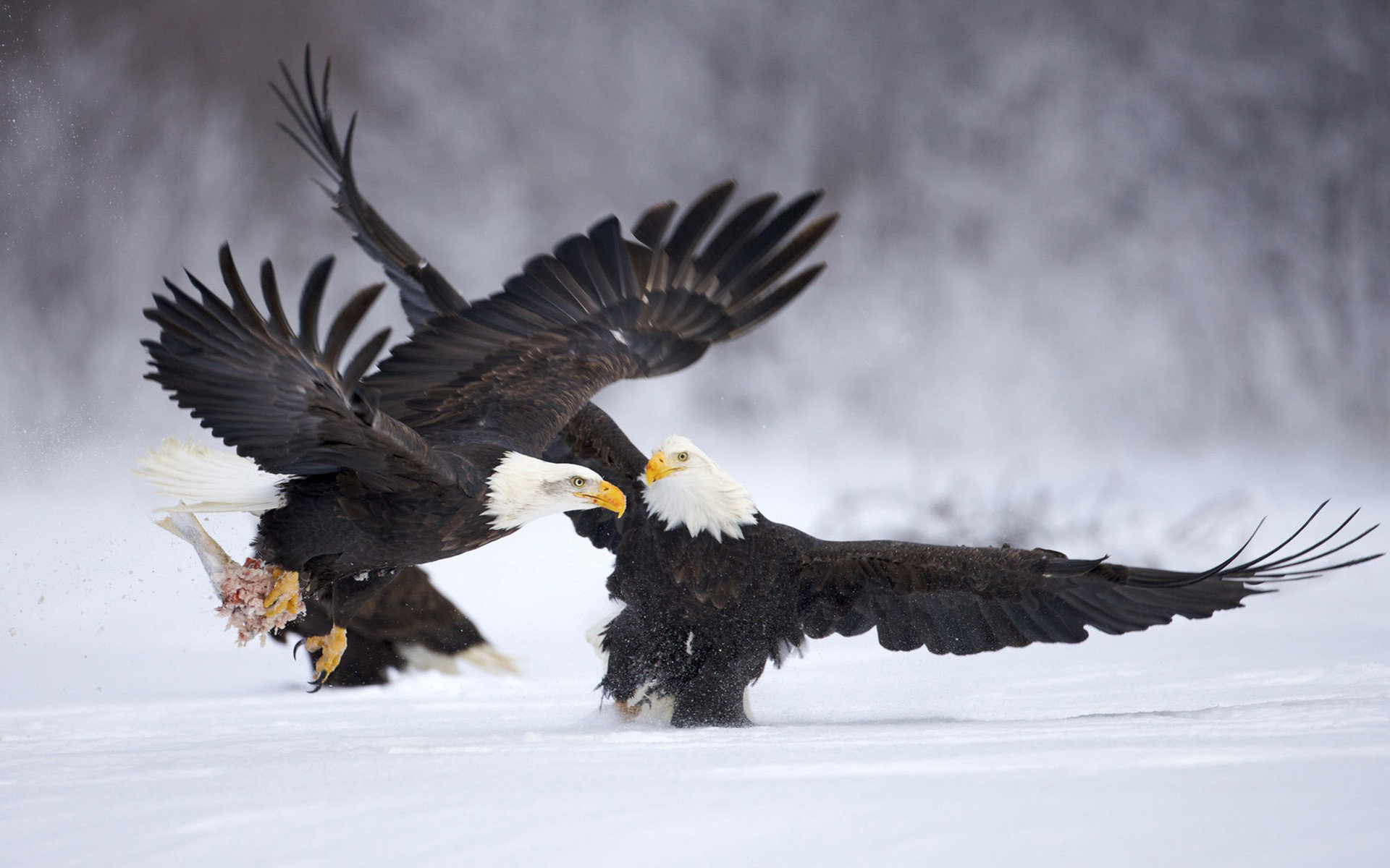 Best American Bald Eagle background ID:68739 for High Resolution hd 1920x1200 PC
