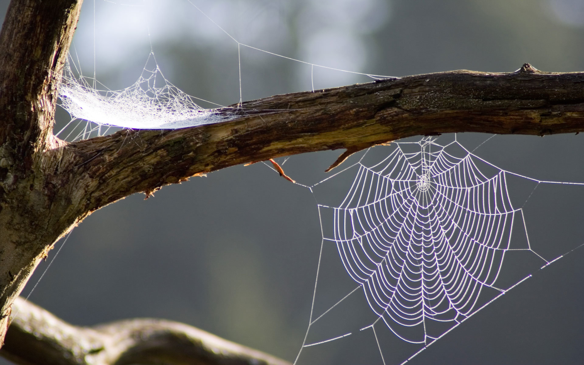 Awesome Spider Web free background ID:184827 for hd 1920x1200 PC