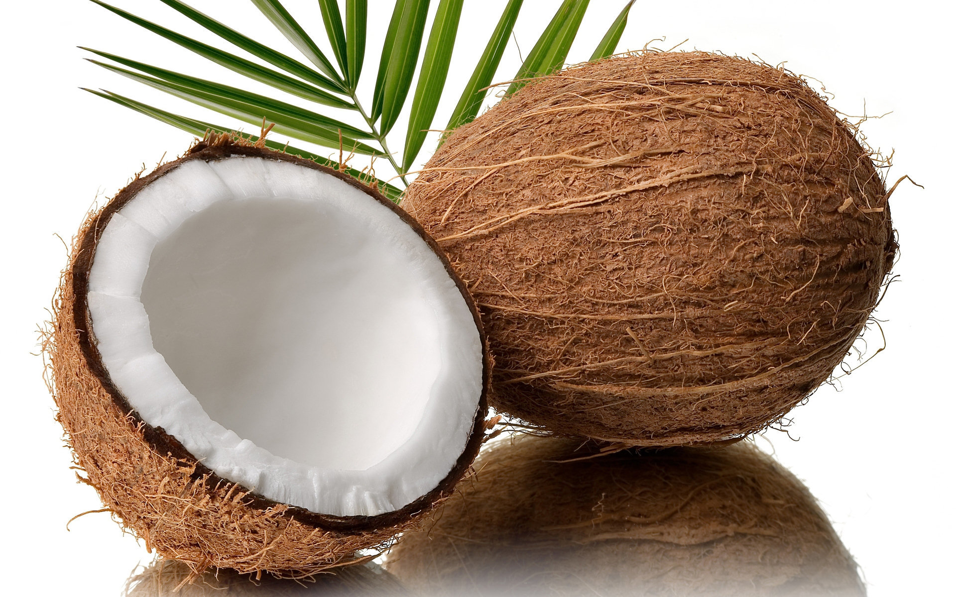High resolution Coconut hd 1920x1200 wallpaper ID:402972 for desktop